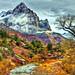 Winter Watchman - Zion National Park