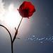 Happy Nowruz 89