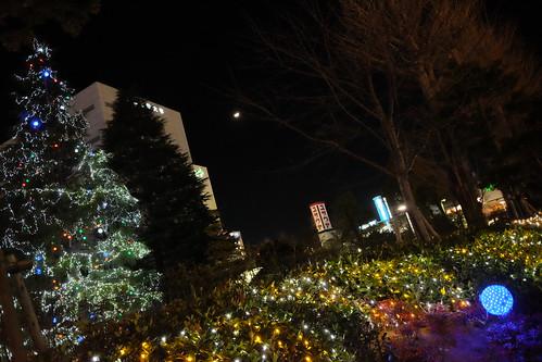 winter illumination tree at Chiba Institute of technology 04