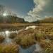 Gorge Wetland