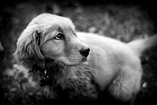 Maddux in Black & White | by thombo2
