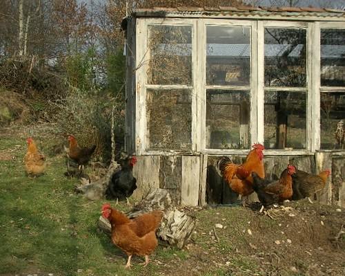 12x12 shed material list, large wooden sheds workshop, outdoor ...