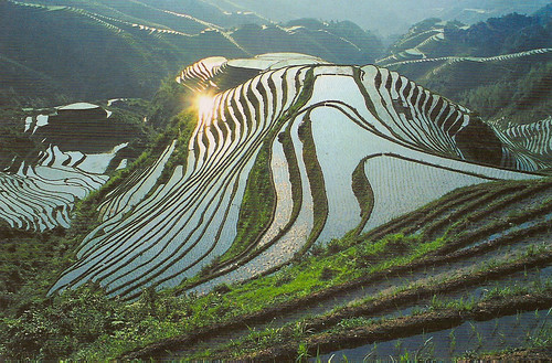 Terraced Fields in Longsheng, China | by katya.