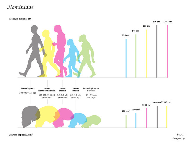 hominidae technical characteristics of hominidae height flickr