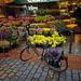 Cler Fleurs, Paris