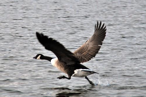 Goose lake jewish singles