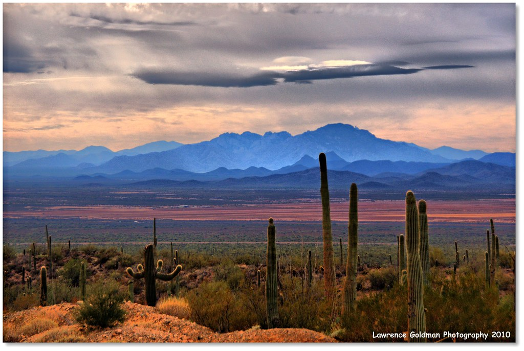 Sonoran Desert Floor from Southwest Desert Museum Overlook