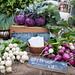 Kohlrabi, Radishes, and Turnips