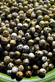 Quails Eggs For The Crews - Bonn Om Toeuk. The Cambodian Water Festival In Phnom Penh | by The Hungry Cyclist