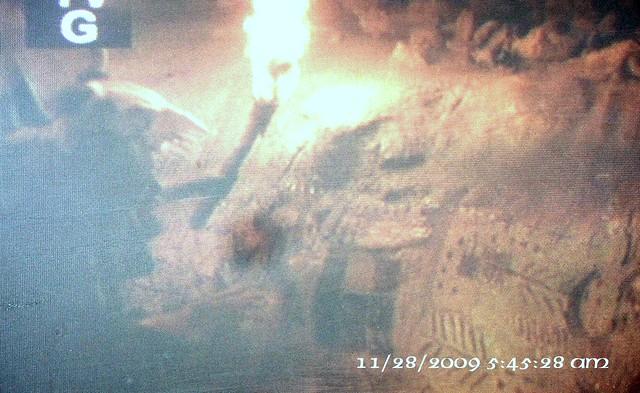 Cro Magnon Man Cave Art : Photo