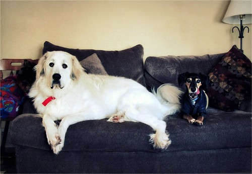 Couch Dogs | by Andromeda Honds