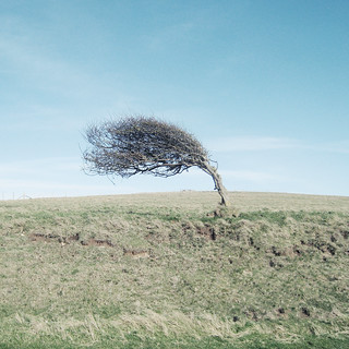 Windswept | by Ben_Patio