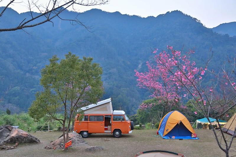 露營車與櫻花山景