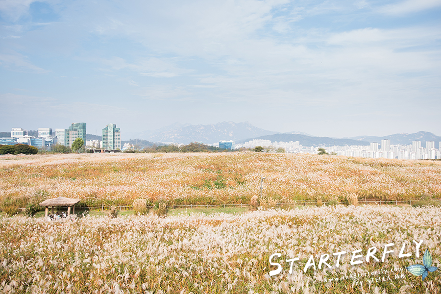 stellama_haneul-park_9