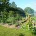 Vegetable Garden July 2009 3