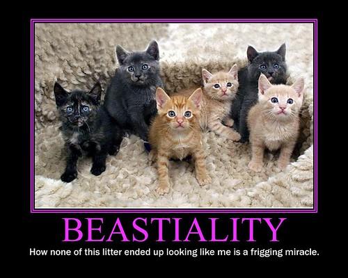 beastiality videos