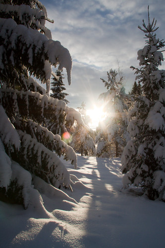Mr. Sunshine enjoying winter | by Paul of Sweden