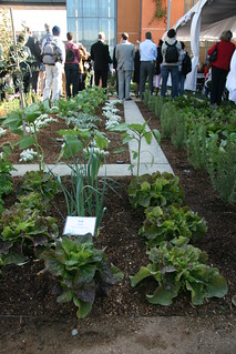 leeks and lettuce at the Grand Opening | by UC Davis Arboretum & Public Garden