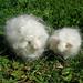 Needle felted sheep waldorf inspired white 2