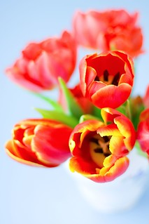 Red tulips | by zapxpxau