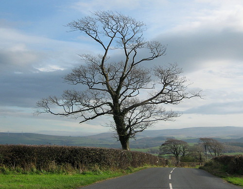 The tree at the crossroads | by Lune Rambler