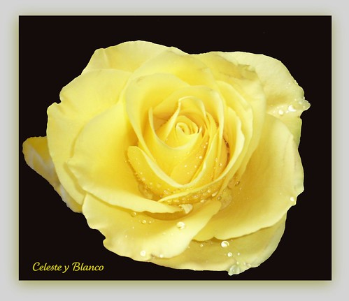 """""  Solitaria """""" 