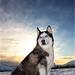 nire txakurra - my dog