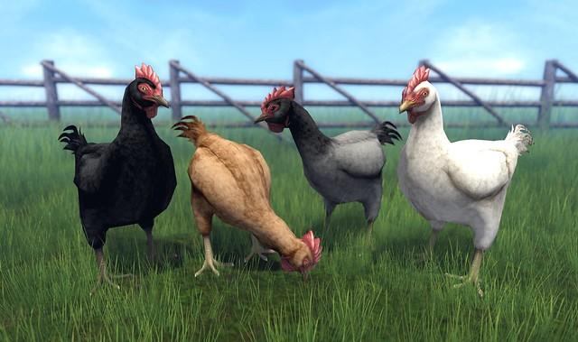 JIAN Chickens (FLF 2.9.17)