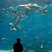 Seriously though, I love the aquarium
