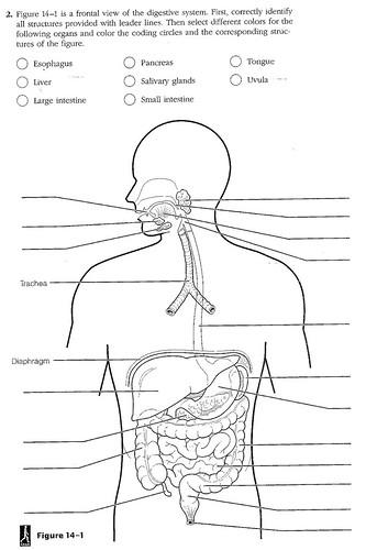 digestive worksheet a timothyakeller flickr. Black Bedroom Furniture Sets. Home Design Ideas