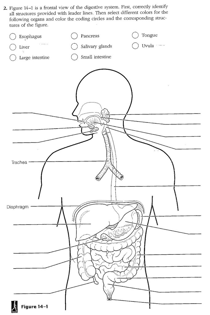 digestive worksheet a timothyakeller flickr. Black Bedroom Furniture Sets. Home Design Ideas