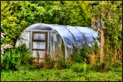 The Plastic Greenhouse. | by Pat Dalton...
