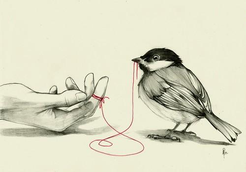 Dibujos de aves en lapiz  Imagui