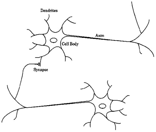 Schematic drawing of biological neurons schematic drawing flickr schematic drawing of biological neurons by ccuart Gallery