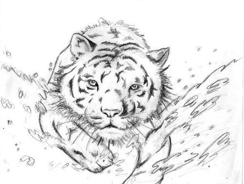 Buri Tigre Corriendo Orilla