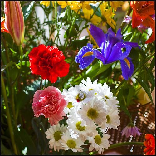 Cocinar con flores un placer para la vista y el palada - Flores para cocinar ...