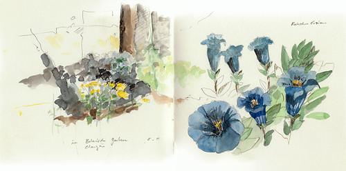 kochscher enzian enzian im botanischen garten erlangen guidoh flickr. Black Bedroom Furniture Sets. Home Design Ideas