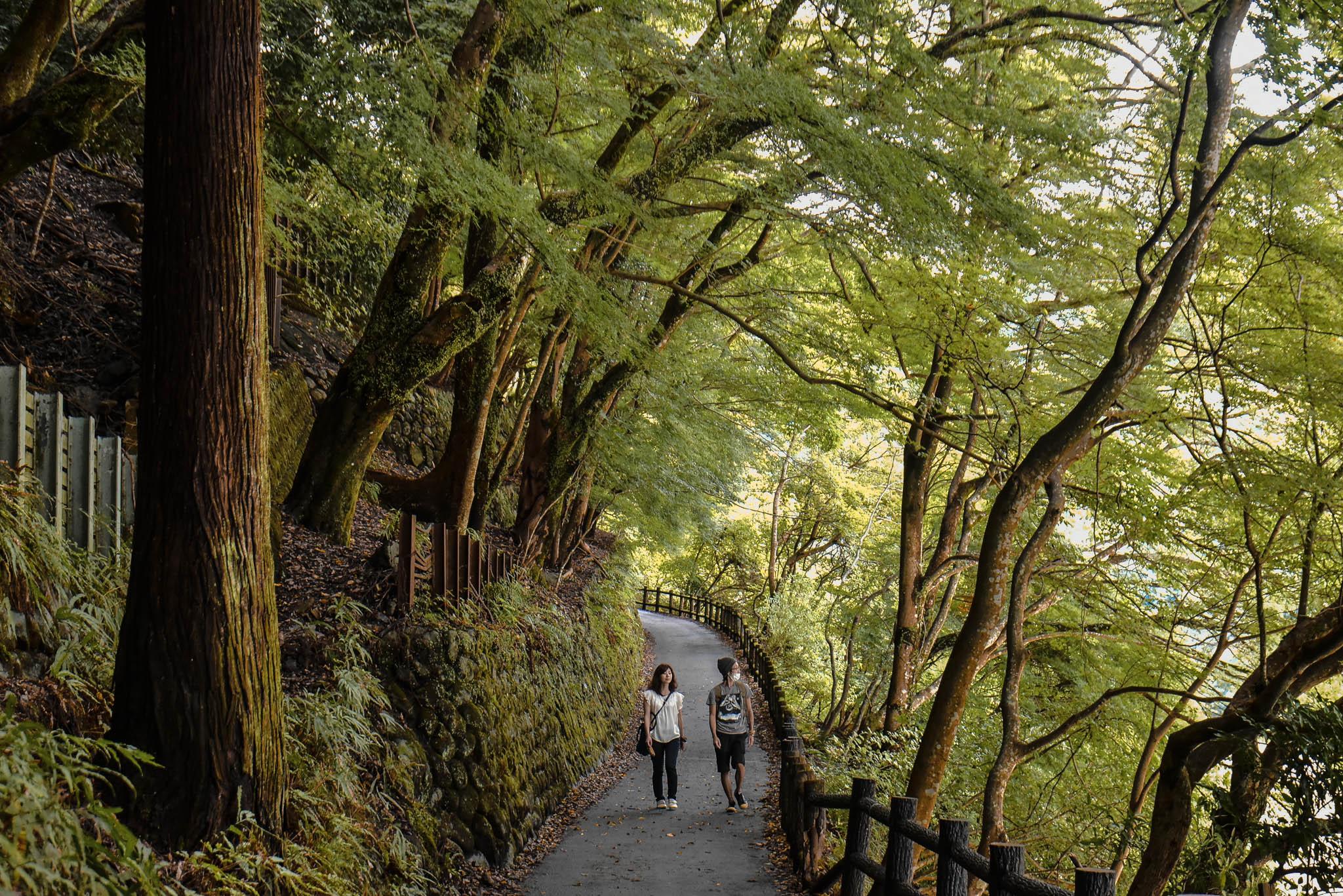 arashiyama 31 (1 of 1)