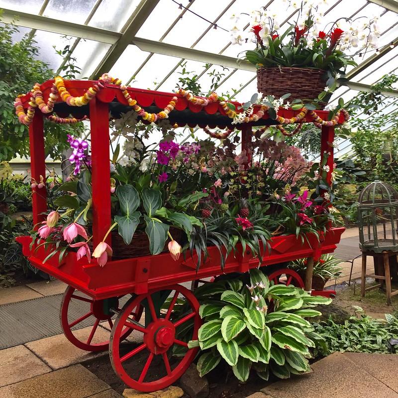 Kew Gardens Orchids 2017
