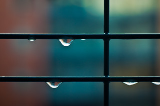 Project 365 Day 7: Drops | by Greg McMullin