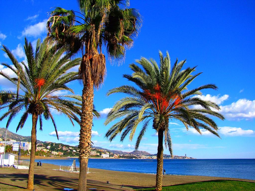 3 Palm Trees On The Mediterranean Beach In Malaga Spain