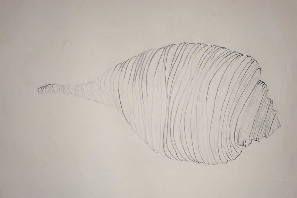 Contour Line Drawing Shell : Cross contour drawing i channeled whelk shell flickr