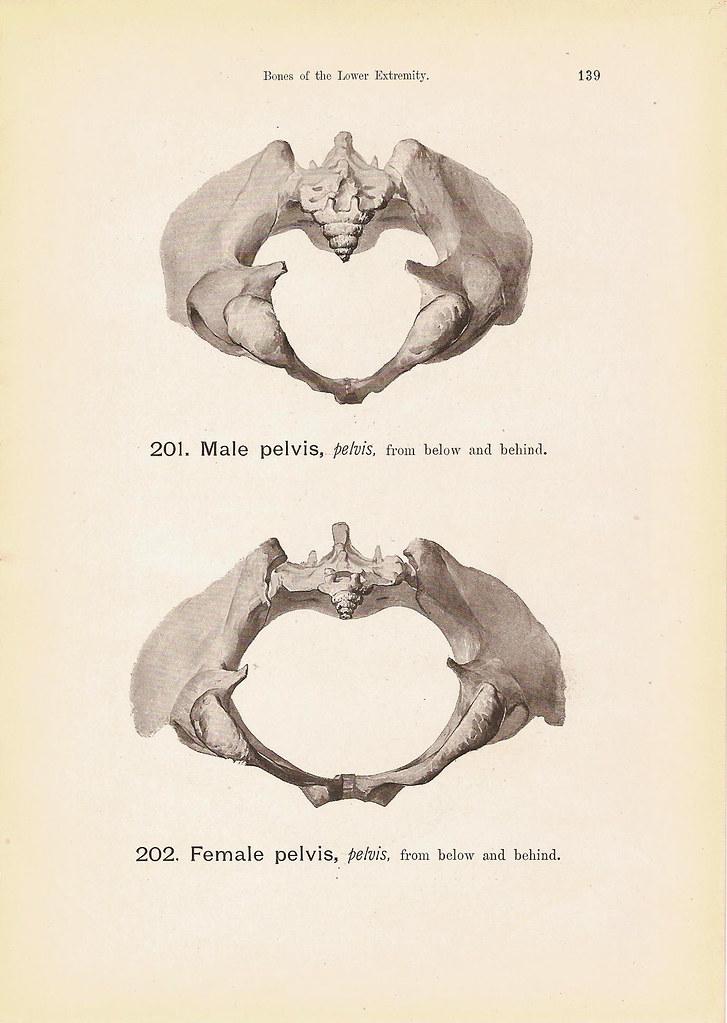 Tail Bone Male And Female Pelvis Diagram Print Steel Engra Flickr