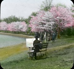 Cherry Blossoms001 | by DC Public Library Commons