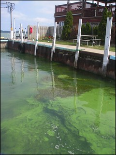 HABs Near Boat Dock | by NOAA Great Lakes Environmental Research Laboratory