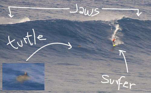 Jaws Maui Flickr Photo Sharing