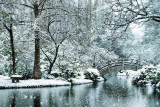 Snow japanese garden fort worth texas snowfall winter stor for Koi pond temperature winter