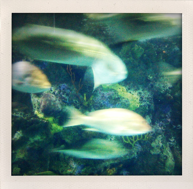 There are a lot of fish in the sea or aquarium or for Places that sell fish near me