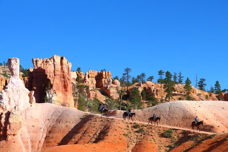 IMG_4551 Mule Ride