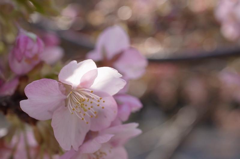 ほのかな春色